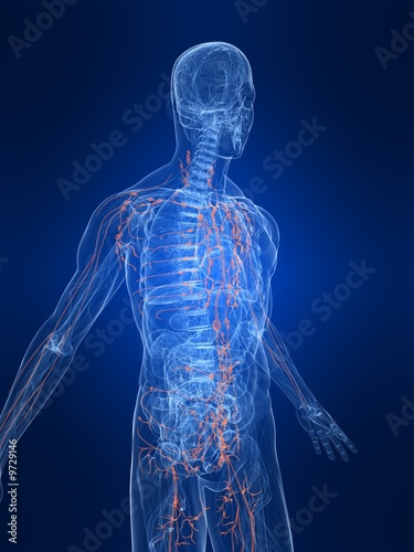 lymphsystem des menschen\