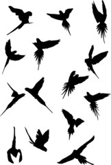 flying parrots, vector collection for designers