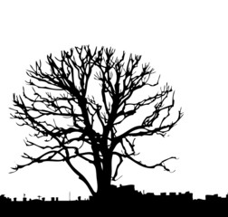 Silhouette of a tree in a city