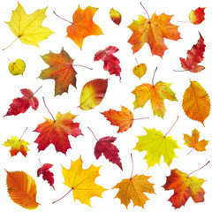 Autumn leaves on a white background...