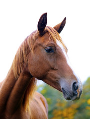 A photography of a brown horse standing