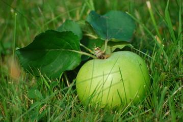 Apfel einzeln