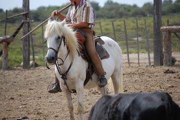 Cheval blanc de camargue 2