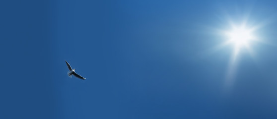 flying bird over clear sky and the sunlight
