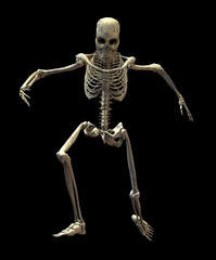 An illustration of a skeleton isolated on a black background