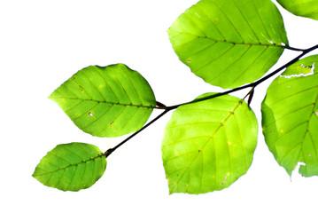 branche et feuilles vertes - décoration pour un coin