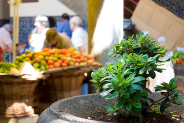 Market's Plant