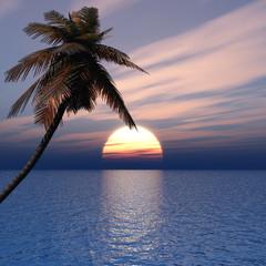 Sunset coconut palm tree on ocean coast
