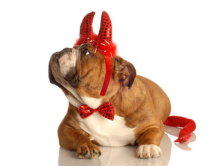 english bulldog dressed up as a red devil..