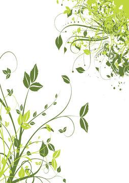 tige et feuille verte