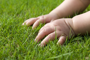 Baby hands on grass