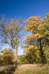 colorful autumn scenery in the park
