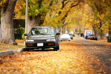 Wall Mural - Autumn street covered with yellow leaves. Shallow DOF