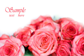 Rosses isolated on white background