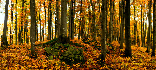 Image of tree in autumn forest. Panorama.