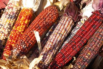 Indiana corn bunch