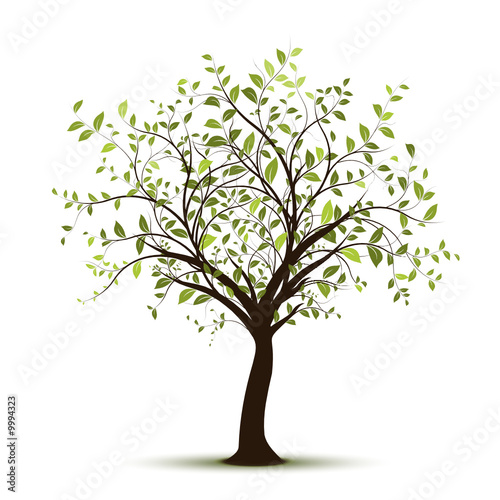 vecteur s rie arbre vectoriel fond blanc green tree on. Black Bedroom Furniture Sets. Home Design Ideas