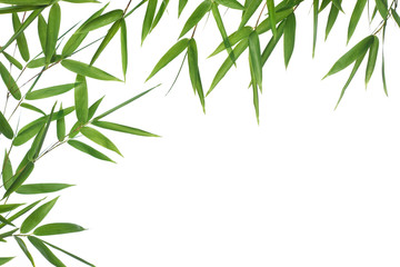 border  bamboo-leaves isolated on a white background.