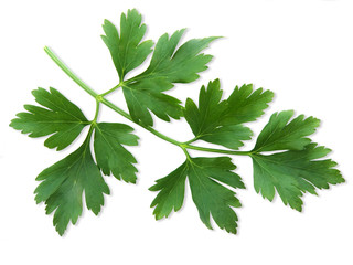 Parsley on white background with clipping path