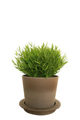 bamboo en pot de fleur