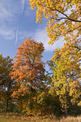a beautiful colorful autumn landscape