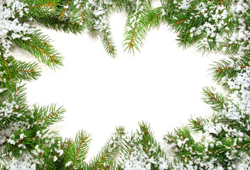 Pine branches with snow on white background