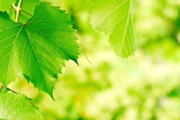 green foliage background with vivid colors