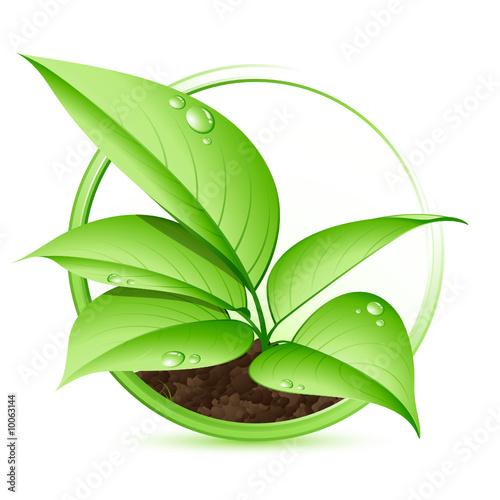 Plante verte fichier vectoriel libre de droits sur la for La plante verte
