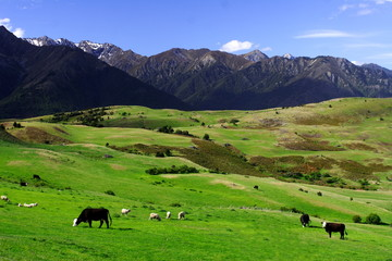 Canvas Prints New Zealand peaceful rural new zealand