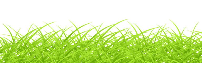 Green grass on white. Vector