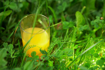 The glass with orange juice is in a grass