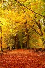 Papiers peints Melon forest in autumn