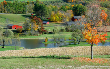 Autumn colors in a country farm  scene with barns, and a lake.