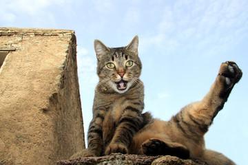 karaté cat