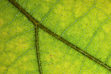 Extreme Closeup of a Leaf