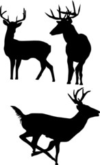 isolated deer silhouettes