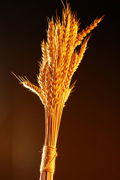 Bouquet from wheat over dark background stock photo