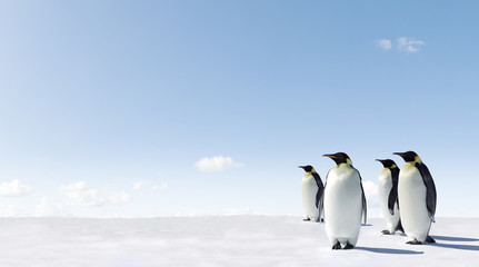 Foto op Canvas Pinguin Emperor Penguins in Antacrctica
