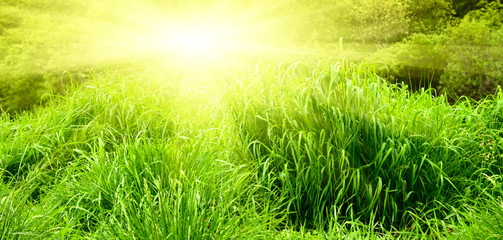 sunset and green spring grass
