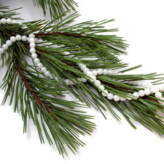 Necklace on fir tree.