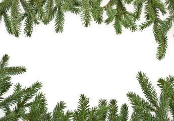 fir tree branches, christmas decoration