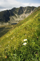 Two Daisies with the Mountains against Backgroud
