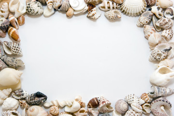 Different shells lying chaotically as a frame