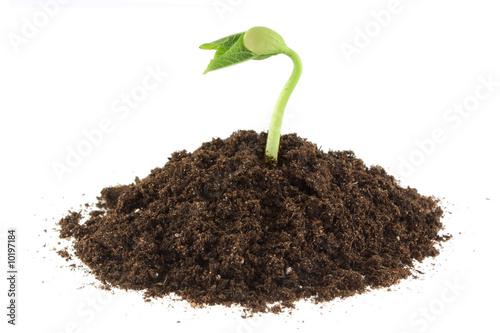 plante qui pousse photo libre de droits sur la banque d