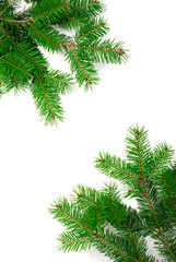 natural green christmas limbs