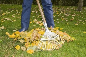 Mann recht Laub im Garten, Herbst
