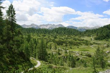 The Julian Mountains