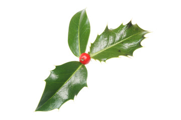 Three holly leaves and single red berry