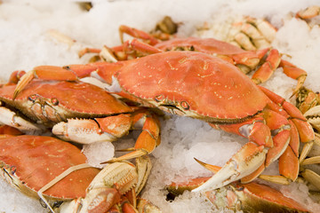 Fresh Dungeness crabs on ice in a seafood market