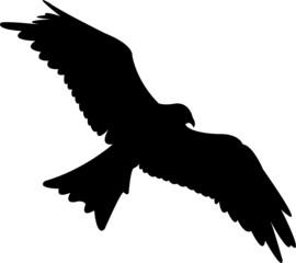 Adler vector